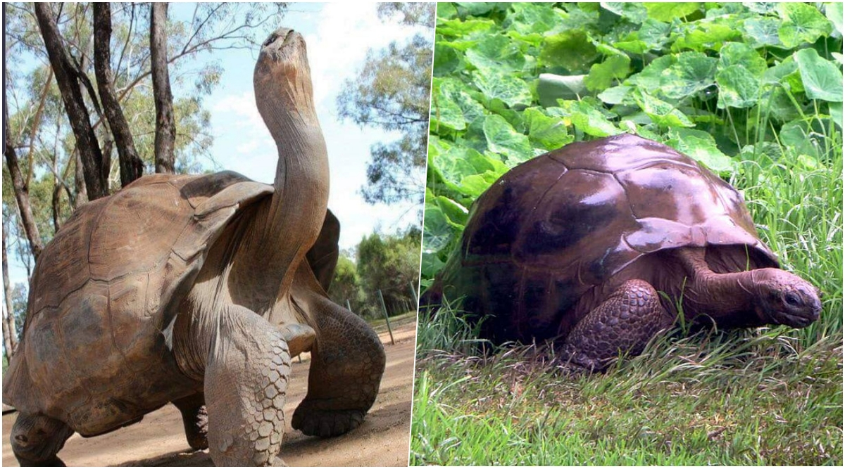 World's Oldest Tortoises: Alagba of Ogbomoso Dead; Here's A List of Other Shelled Animals Who Lived Beyond 100 Years And The Ones Who Continue to Live Past Century