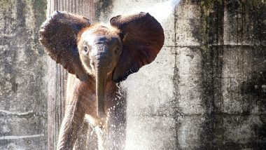 Baby Elephant 'Avi' Dies at St Louis Zoo Weeks After His Birth