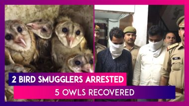 Ghaziabad: Two Bird Smugglers Arrested, Five Owls Recovered