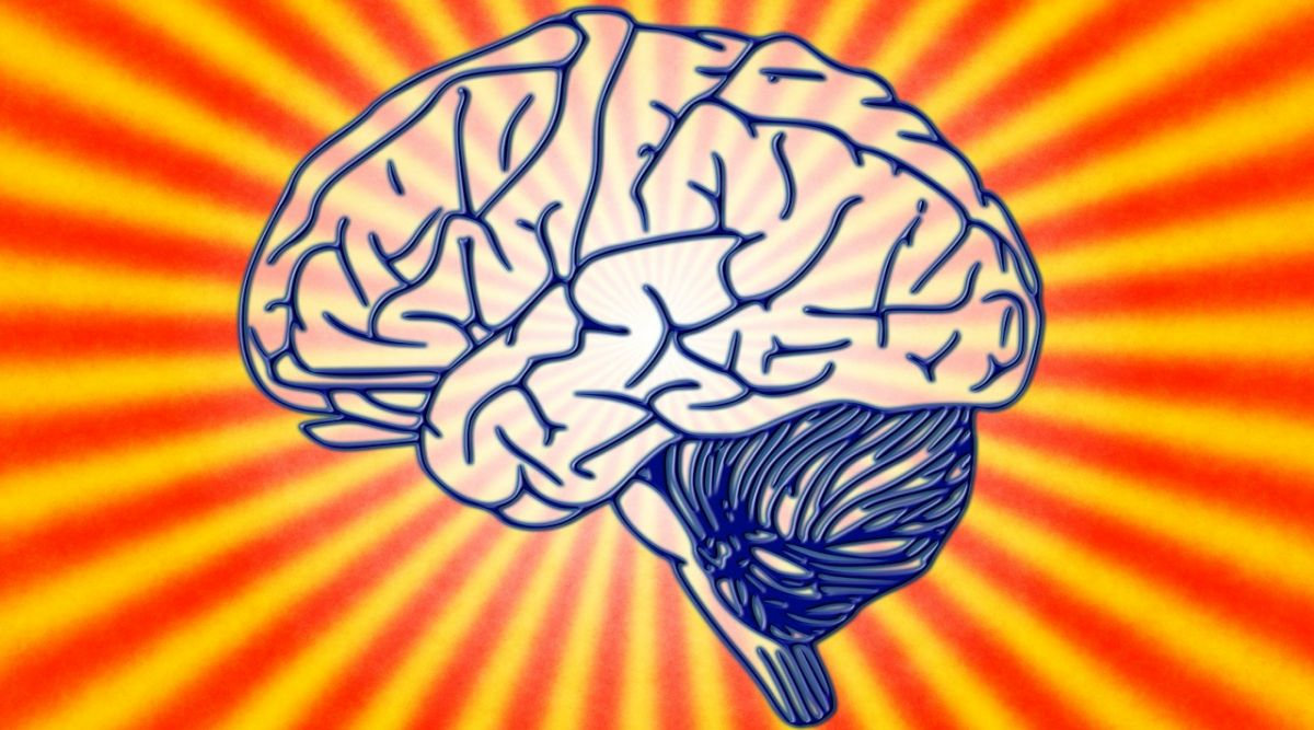 How Does The Brain Balance Pleasure and Pain? Study Reveals Interesting Facts