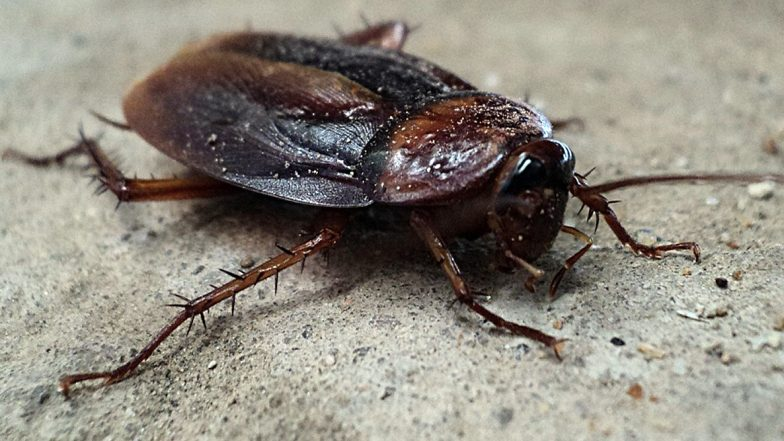 Cigarette-Smoking Cockroach at NYC Streets Is the New Internet Sensation! Gross Viral Video Sparks Meme-Fest Online