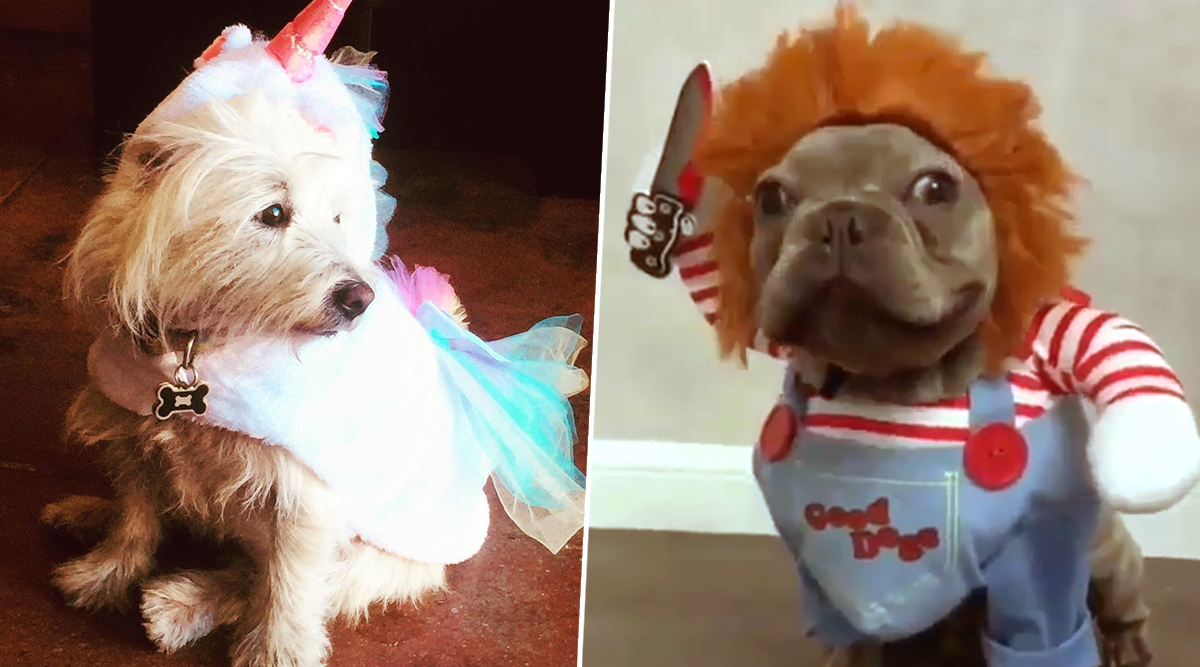 Halloween 2019 Costume Ideas for Pets: Spooky Yet Cute Dog Outfits That Every Pup Parent Should Have (View Pics)