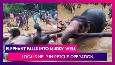 Elephant Falls Into Muddy Well, Locals & Forest Officials Join Hands To Rescue The Jumbo