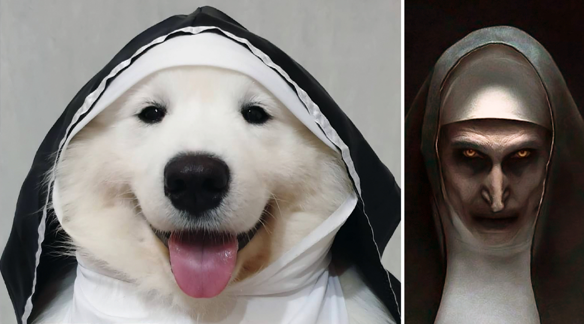 Halloween 2019 Costume Ideas for Dogs: Dog Dressed As The Nun Is Best Last-Minute Hack to Dress Your Pet for the Spookiest Festival (View Adorable Pics)