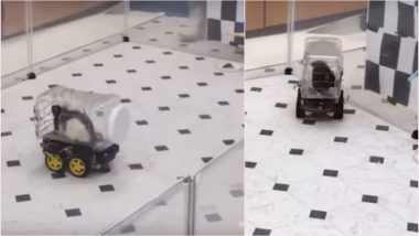 Rats Drive Tiny Electric Cars to Lower Their Stress Levels, Here's How These 'Stuart Littles' Were Taught Driving (Watch Viral Video)