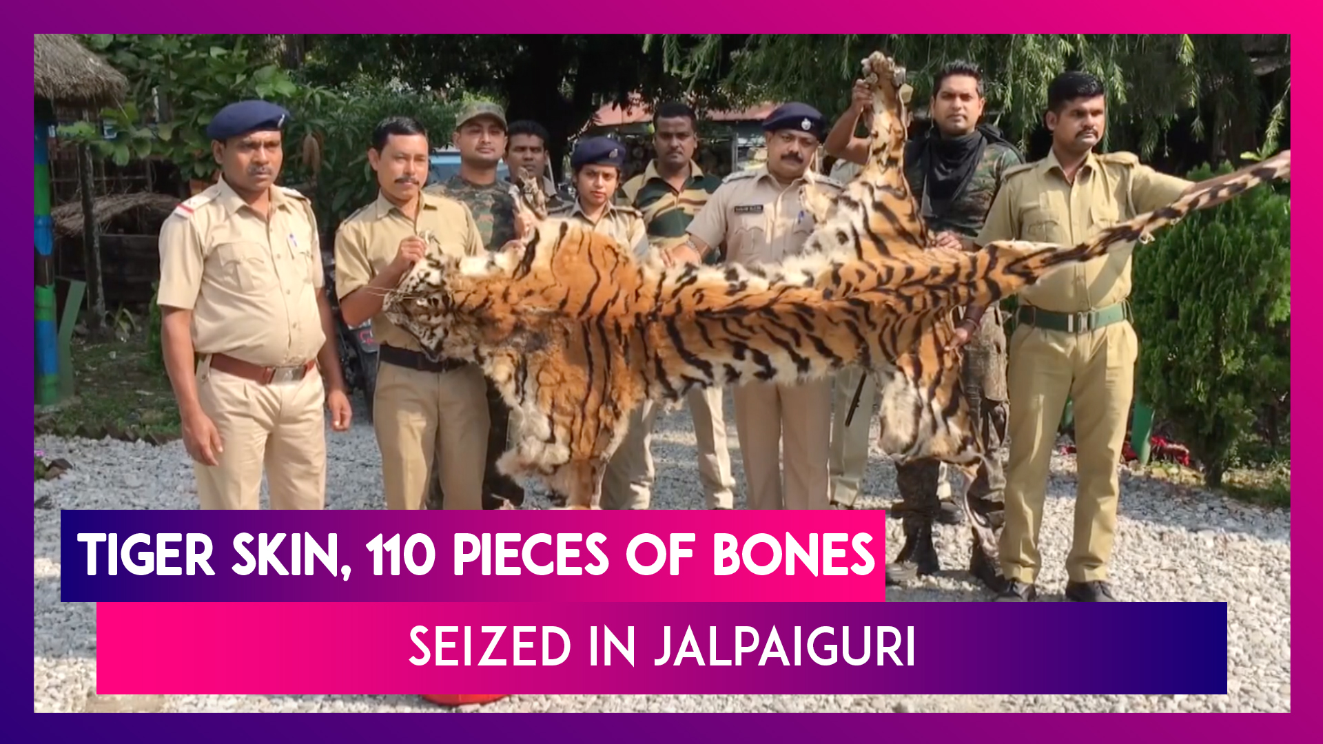 14-Feet-Long Royal Bengal Tiger Skin Seized In Jalpaiguri, Two Bhutanese Nationals Arrested