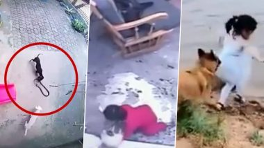 Pets are Lifesavers! 5 Times Videos of Cats and Dogs Saving Human Lives Went Viral