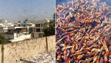 Karachi Under a Massive Locusts Attack, Pakistan Minister Suggests Eat 'Tiddi Biryani' to The Residents of the Metropolitan City! Watch Video