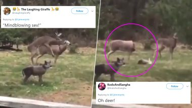 Viral Video of a Deer Trying to Have Sex with a Doe Figurine Before 'Blowing' Its Head off Has Netizens Come up with Witty and Punny Reactions