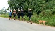 Karnataka: Stray Dog Follows Sabarimala Devotees For Over 500 Kms; Pilgrims Say It's a New Experience; Watch Video