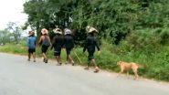Karnataka: Stray Dog Follows Sabarimala Devotees For Over 500 Kms; Pilgrims Say It's a New Experience; Watch Video