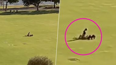 Viral Video of Couple Having Sex in a Public Park in Perth Is Infuriating Netizens; Police Calls It a 'One-Off' Incident