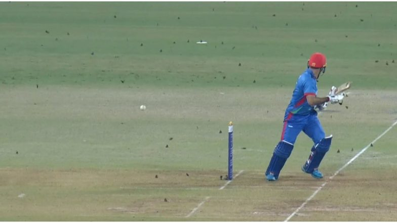 'Insects' Attack Afghanistan vs West Indies 2nd ODI Match at Lucknow, Pitch Invaders Refuse to Leave Ground