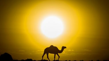 World Camel Day 2021 Date and Significance: Know Amazing Facts About Camels That Will Surprise You