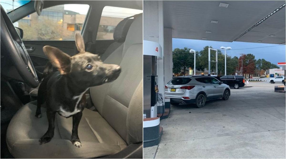 Dog Puts Car in Reverse and Drives Across 4-Lane Road in US, Shocked Owner Left Chasing Behind (Watch Viral Video)
