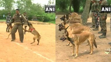 Here's How Dogs Get Trained to Accompany Special Forces for Risky Operations