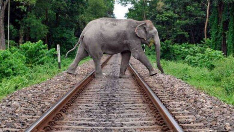 As More Elephants Die on North East Train Tracks, Indian Railways Introduce Steps To Reduce Elephant Casualty