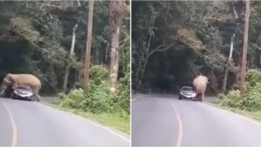 Elephant Tries to Hug Car at Khao Yai National Park in Thailand Scaring Driver, Ends Up Shattering Rear Window (Watch Video)