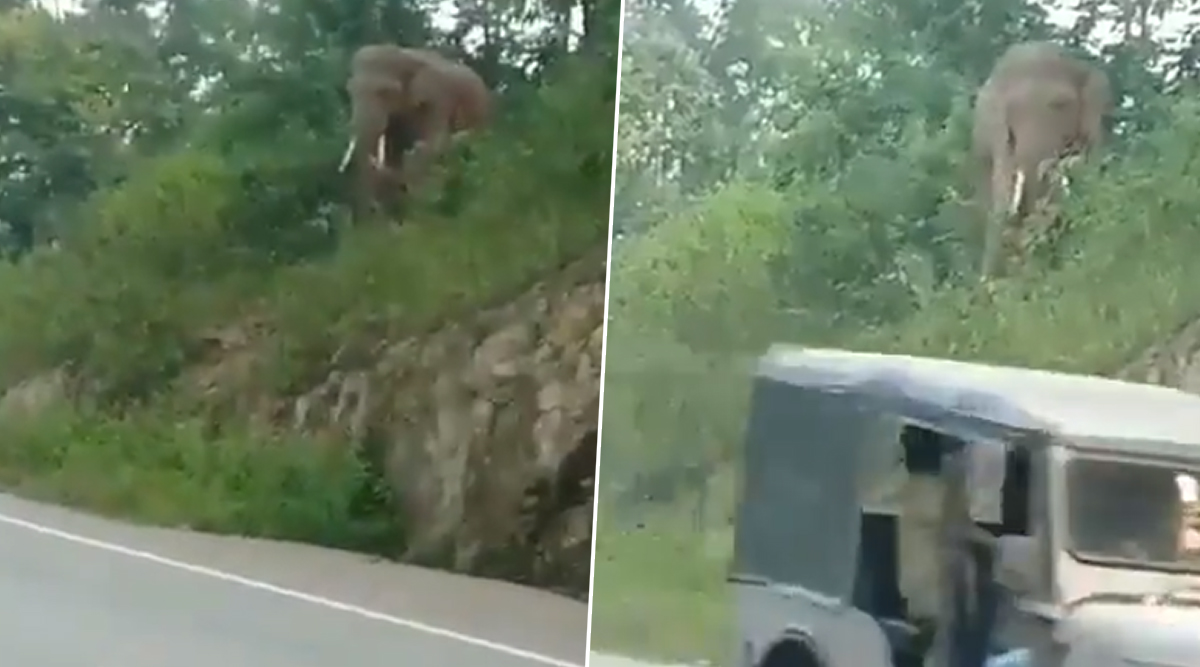 Elephant With Traffic Sense! Video of Jumbo Waiting For Vehicles to Pass on Busy Road Amuses Netizens