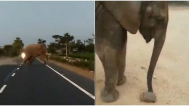 How Humans Cross The Road Vs How Elephants Cross The Road! These Videos Show We Have a Lot to Learn From Jumbos