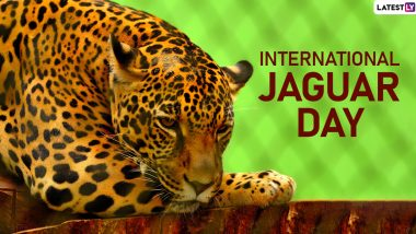 International Jaguar Day 2019 Date: Significance of The Day that Raises Awareness About Conserving the Wild Cats