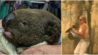 Lewis, The Koala Saved From Australian Bushfires by Woman Dies Due to Severe Burns