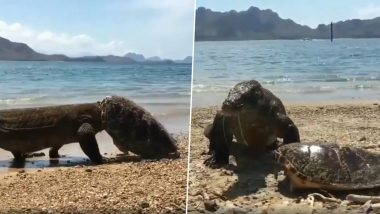 Komodo Dragon Eating a Turtle and Throwing Off The Shell is Cruel Reminder of Survival in Nature (Watch Viral Video)