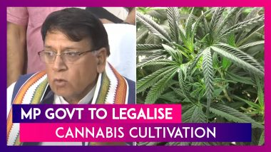 Madhya Pradesh: Government To Legalise Cannabis Cultivation In State, Says Law Minister PC Sharma