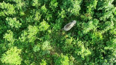 Elephant Named After Osama Bin Laden Kills Five Villagers in Assam