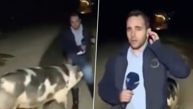 Pig Follows Journalist Live Reporting on Floods in Greece And Bites Him, Video Goes Viral