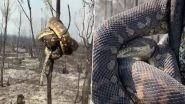 Giant Snake Wraps Around Burnt Tree Branch From Scorched Forest in Australia Bushfires (Watch Video)