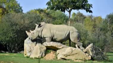 World's Oldest Captive White Rhino, South African-Born Sana Dies at 55 in French Zoo