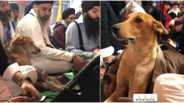Stray Dog Attends 550th Parkash Purab Celebrations and Enjoys Guru Nanak Dev Kirtans Along With Devotees, Adorable Videos Go Viral