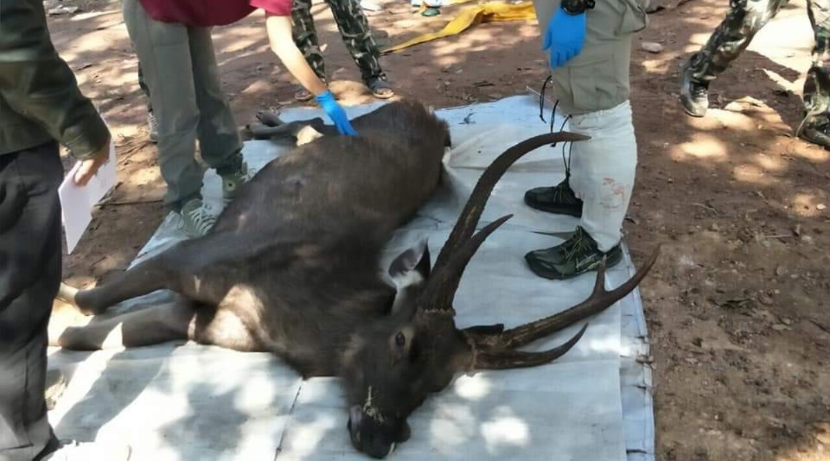 Thai Deer Found Dead With 7kg of Plastic, Underwear and Coffee Sachets in Stomach! (See Pictures)