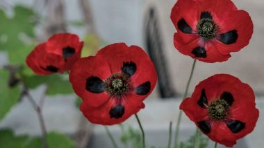 Remembrance Day 2019: History & Significance of the Day Also Known as Armistice Day in Memory of Soldiers Martyred During Wars
