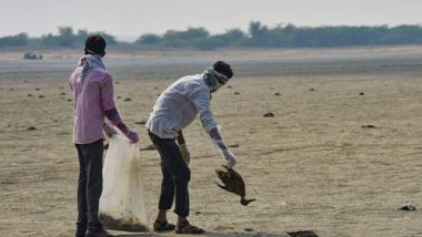 Rajasthan Bird Deaths: Over 4,000 Migratory Birds Found Dead Near Sambhar Lake, Death Toll Shoots to 15,000 Till Now