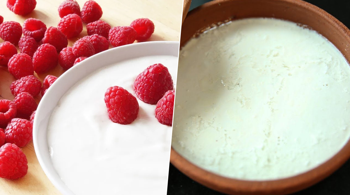 What is The Difference Between Curd and Yoghurt? Know How These Dairy Products Differ From Each Other and Which One's Healthier