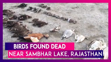 Thousands Of Birds Found Dead Near Rajasthan's Sambhar Lake, Avian Botulism Reason Behind Deaths