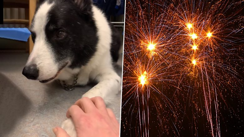 Video of Dog Shivering at the Sound of Fireworks Goes Viral, Owner Calls for Ban of Crackers in Scotland