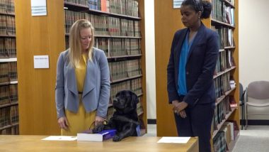Hatty, the Labrador Sworn In As Chicago State Attorney's Emotional Support Dog to Comfort Child Survivors of Sexual Assault (View Pics)