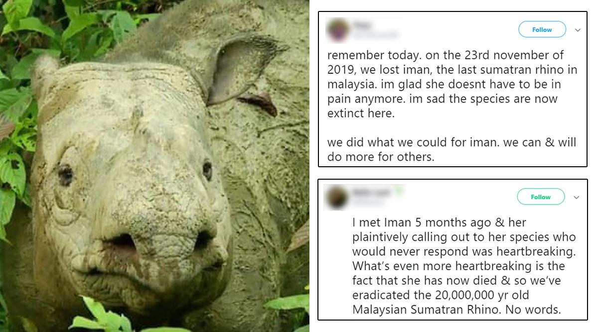 Iman, Malaysia's Last Known Sumatran Rhino Dies Due to Cancer, Twitterati Mourns (View Pics)