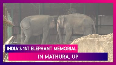 India's First Elephant Memorial Opens Up In Mathura, Uttar Pradesh
