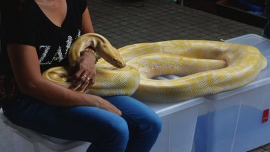 US Woman Found Dead With Dangerous Python Wrapped Around Her Neck in a House Full of 140 Snakes!
