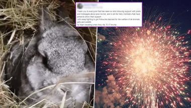 After Puppy Molly, Rabbit Dies of Fright at the Sound of Fireworks; Pet Owners Demand Ban of Crackers on Social Media (Watch Viral Video)
