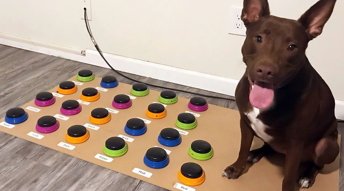 Smart Dog Stella Is Instagram's Favourite As the Pet Learns to Talk in Sentences Using Custom Keyboard, View Pics and Videos