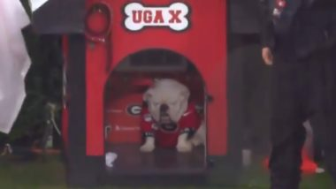 PETA Under Fire Again! Animal Rights Organisation Asks for Georgia University's Football Mascot Dog Uga's Retirement but Fans Don't Agree