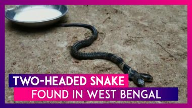 Two-Headed Snake Found In West Bengal's Belda