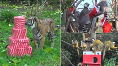London Zoo Animals Receive Their Christmas Presents Early! Heart-Warming Pics and Videos Go Viral
