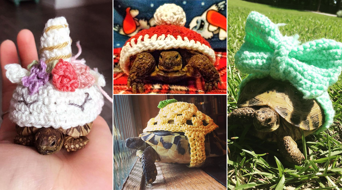 Tortoises Wearing Crochet Sweaters Go Viral on Instagram! Here Are Pictures to Warm Your Heart This Winter