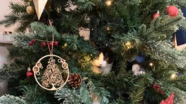Cats vs Christmas Trees: 7 Videos That Show The Annual Fight Between Your Feline And The Festive Tree